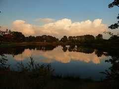 Reflections (davidntaylor1968) Tags: tree reflection water lake scenics tranquility tranquilscene sky beautyinnature nature cloudsky growth day nonurbanscene outdoors waterfront nopeople october photography countryside calm rippled