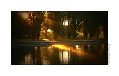 P2110252 (cowsandgirl71) Tags: panasonic fz200 parc de sceaux couleur reflet lumire portrait landscape canard jaune eau arbre