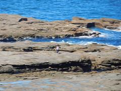 Norah Head_007 (mykalel) Tags: norahhead lighthouse
