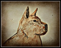 Daiko (patrick.verstappen) Tags: daiko dog pet painting painted art texture textured twitter ipernity ipiccy image photo picassa pinterest pat picmonkey portrait nikon d7100 gingelom google flickr facebook watercolor acryl paper