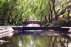 Peaceful (Photo Amy) Tags: china bridge trees tree green water chinese beijing restful peaceful ef50mm18 canoneos50d nearforbiddencity