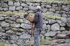 Llama Carry, Machu Picchu