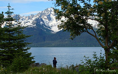 Beauty of Seward Alaska (Tara Lynns Photography) Tags: trees summer dog mountain snow man mountains tree art nature water alaska standing photography photos pics scenic ak wallart pic capped seward