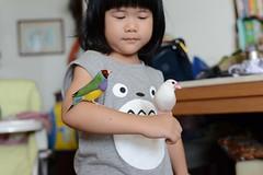 DSC_9183 (Jenny Yang) Tags: 小啾啾 斑斑 白文鳥 胡錦鳥 lady gouldian finch pet bird