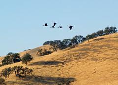P1016013-001 (Cepreu K) Tags: livermore california eastbay