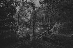 Safe enough (Appe Plan) Tags: tree forest black white bw le nd filter long exposure exploring explore nature landscape stream water river old abandoned borken appe nikon d700 dalarna sweden