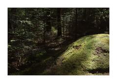 Husby Klitplantage, Denmark (2016) (csinnbeck) Tags: husby klit klitplantage plantage trees pines shadow light forest green x100 fuji 35mm denmark dk jutland fujix100 west coast 6990 2016 photo border landscape outdoor