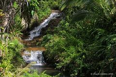 Princeville_Botanical_Gardens-6 (Chuck 55) Tags: princeville botanical gardens kauaihawaii kauai