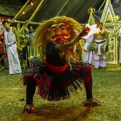 devil dance - yak netum - 1 (Priyantha de Alwis) Tags: culture dance devolmadu gammadu ginimadu lowcountrydancing occult shanthikarma srilankantraditionaldancing traditionaldancing srilankasrilanka priyanthadealwis ginimadushanthikarma devolmadushanthikarma gammadushanthikarma dancing traditionaldance srilankantraditionaldance traditionallowcountrydancing srilankantraditionallowcountrydancing paranormal supernatural metaphysical ritual rituals srilankaritual srilankarituals bringpeaceandprosperity tribal srilankatribal shaman shamanism pattini hindupattini hindupattinicult healing psychologicalhealing healingritual healingrituals astrology pooja pattinipooja religion belief healingceremony healingceremonies vishnudeviyo samandeviyo kataragamadeviyo nathadeviyo narangodapaluva batuwattatemple batuwatta ethnicreligion ethnicreligions shamanicbeliefs shamanicpractices religiousecstasy supernaturalrealms supernaturaldimensions indigenousreligions contactspirit priest psychologicalcrisis exorcising exorcism paththini hindupaththini hindupaththinicult