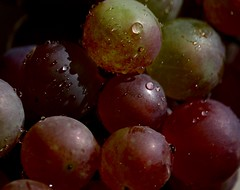Berries (Klaudia D. P.) Tags: grapes grape fruit fall autumn color colors colorful colours drops waterdrops raindrops shiny fresh freshness food bokeh closeup dof