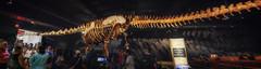 2016-06-10 - 226-253 - HDR - Panorama (vmax137) Tags: 2016 ny nyc new york city manhattan upper west side american museum natural history amnh dinosaur titanosaur panasonic dmcgh3 hdr panorama