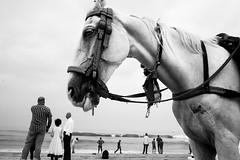 Marina Beach, Chennai, 2016 (bmahesh) Tags: marinabeach chennai tamilnadu india people life horse beach ricohgr wwwmaheshbcom