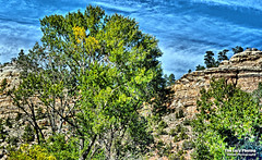Sept 11 2016 - Summer's almost gone - 9-11 ride in the Bighorn Mountains (lazy_photog) Tags: lazy photog elliott photography 911 memorial ride honoring parents both died september 11 1994 2001 ten sleep wyoming canyon trees turning colors leaves rocky cliffs blue sky clouds motorcycle 091116bighornmountain911memorialride