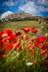 Castelluccio (camperpida) Tags: fioritura lenticchie blossom lentil castelluccio