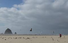 through the gulls (carolyn_in_oregon) Tags: cannonbeach oregon beach pacificocean coast jacob al allie