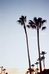 Fading (Laura-Lynn Petrick) Tags: series texas landscapes palms palmtrees lauralynnpetrick lauralynnpetrickocean lauralynnpetrickwaters lauralynnpetricklake lauralynnpetrickoceanview lauralynnpetrickamerica americana lauralynnpetricktexas texassouth deeptexasbirds birdsanctuary