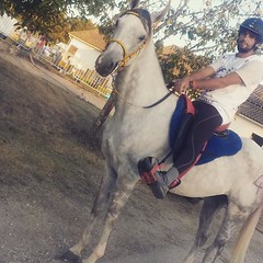#cuadraelalisal #CEIopennegrepelisse2016 #Hidalgo #caballos #angloarab #decimopuesto #raid120km