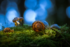 Nuit Magique (Fontaine Loic - photographie) Tags: escargot snail scenic macro mushroom fungi pilz champignon forest light lightpainting nature botanic colorful view trees wall wide wood wild traditional panoramic sky texture summer rain image misty color fall leaves scene canon tamron 6d