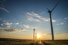 West Texas Morning (1 of 40) (mharbour11) Tags: wildcats elk purple sunrise westtexas texas sky windturbines windmill sun silhouettefire silhouette