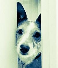 160805-Lluna02 (CanicPhoto.) Tags: lluna gossos canicphoto dog gos barcelona love