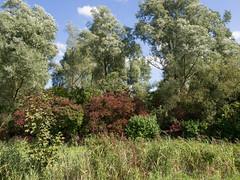 Lauwersmeergebied (Jeroen Hillenga) Tags: lauwersmeergebied lauwersmeer friesland frysln netherlands nederland natuur nature natuurgebied landscape landschap trees bomen
