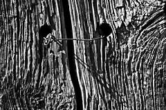 Fissure. Rift. (sergecos) Tags: graphisme graphic texture noiretblanc blackandwhite bois vieux old timber nikon d7000