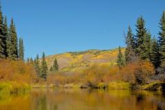 Osprey Lost in the Blue (MIKOFOX  Show Your EXIF!) Tags: bird willows river canada fall yukon water aspen fujifilmxt1 spruce nordenskioldriver osprey landscape xt1 september showyourexif mikofox xf18135mmf3556rlmoiswr
