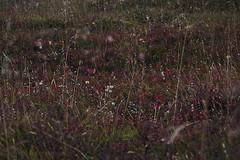 sept-1010406 (lebeaupinagnes) Tags: agneslebeaupin agnes lebeaupinagnes landscape myvatn automne mood north norduland northlife september iceland islande icelandic colours