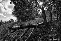 campolungo, amandola (Fabrizio Diletti (Fermo, Italia)) Tags: luce italia italy light marche amndola paesaggio landscape field sole sun verde riflessi raggi ray rays reflection d750 zenitar black white bianco nero fisheye grandangolo sibillini