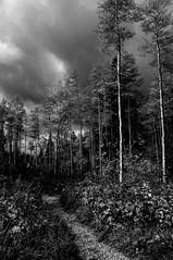 big tesuque drama (johngpt) Tags: bigtesuquetrail fujifilmfinepixx100 santafenationalforest wclwideconversionlens aspen clouds foliage plants santafe tree trees sliderssunday hss