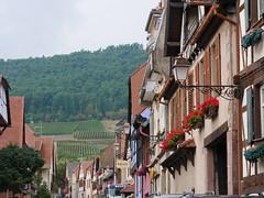 P1160007 (lychee_vanilla) Tags: kintzheim alsace routedesvins vins