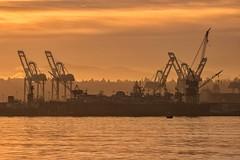 A few Portofseattleasarus just waking up (marcusklotz2014) Tags: portofseattle crane ilwu washingtonstate