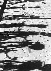 Schattenspiel #3 (Maxi Winter) Tags: shadows light bw sw blackandwhite noiretblanc schwarzweis abstract abstrakt abstrait ombres lumire schatten licht nikonf75 agfaphotoapx100professional asphalt gehweg pavement sidewalk trottoir sommer summer t