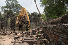 A tree gives up its stranglehold (abbobbotho) Tags: cambodia angkorwat krongsiemreap siemreapprovince kh
