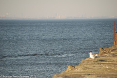 2016.10.18; Bayshore Waterfront Park-4 (FOTOGRAFIA.Nelo.Esteves) Tags: 2016 neloesteves nikon d80 usa us nj newjersey monmouthcounty bayshore waterfront park raritan sandy hook bay nyc marina