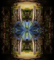 Middle of Nowhere (rhonda_lansky) Tags: nowhere trees portal surreal fantasy plants creations formations nature design abstractoutdoors outdoor mirroredshapes mirrorart symmetryart symmetrical symmetryartist earth expressive lansky visual plant foliage rhonda pattern organic texture poems shortstories storys writing