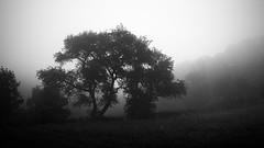 summer mist (koaxial) Tags: p7177089aajpg koaxial baum tree fog nebel summer rain regen damp feucht nass