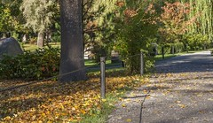 Alee In The Autumn Park (AudioClassic) Tags: foliage autumn leaf park forest scene tree alee plant footpath fall day landscape road outdoor woodland lush season comfortable peaceful perspective relaxation yellow scenery path colored falling color golden branch vibrant photography walkway wood