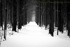 The Lonely Glimpse of Tomorrow (13skies) Tags: bw blackandwhite snow trees woods path trails winter january