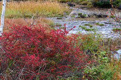 19Maime Pond (anglo10) Tags:  autumnleaves  field    japan