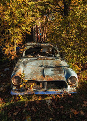 Taunus (Pilleluringen) Tags: rural rurex car taunus ford trees decay sweden abandoned depthoffield urbex outdoor vrmland old nature serene