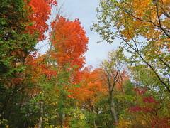 Seasonal Colours/ Les Couleurs d'automne (anng48) Tags: autumn fall automne parcnaturedelilebizard ilebizard montreal quebec qc canada