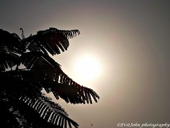 DSCF8022 (Evit John) Tags: sun tree nature silhouette clouds photography friend ilovephotography manipal monochrone earltmorning