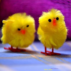 Love ! (dimitra_milaiou) Tags: pink 2 two color colour bird chicken love smile animal yellow easter square toy greek happy photo eyes nikon couple europe child photos d small 4 may hellas happiness explore greece together hora format shape 90 chora andros dimitra d90  explored 2013       milaiou