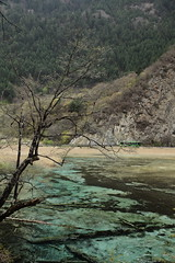 (yvone042488) Tags: park travel lake tree water landscape spring colorful national jiuzhaigou