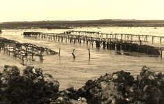 Oyster farming (niscratz) Tags: france europe ileder loix 2013
