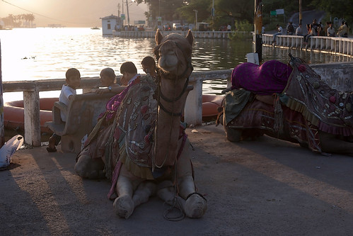 Cartoon - Decorated camels and tourists on the shore of Fateh Sagar Lake in Udaipur in India