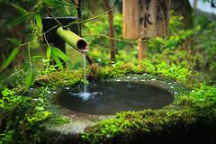 Tsukubai water fountain at Sanzenin Temple (bobthemagicdragon) Tags: green water fountain japan garden temple spring kyoto buddhism bamboo zen ohara sanzenin tsukubai kakehi 2013 shuhekien