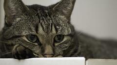Paw pillow (wcwhiting) Tags: canon t3i cat cats felines idiot wcwhiting billwhiting 100mm28l 100mm28lmacro 100mm28macro 100mm ef100mmf28lisusmmacro billwhiing