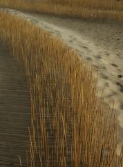 Standing straight (Jaedde & Sis) Tags: sand shadows path dunes 15challengeswinner ultrahero gamesweep gamex2 herowinner pregamesweepwiiner herohalloffame